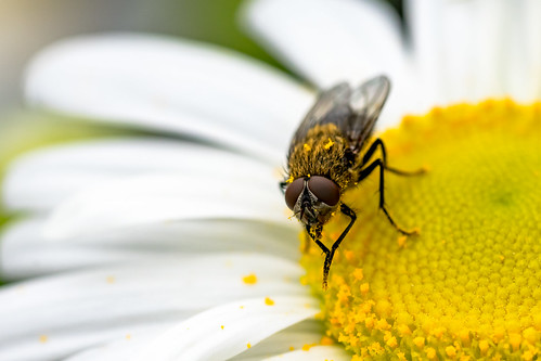 Macro Fly | by Manns Woodland Perspective