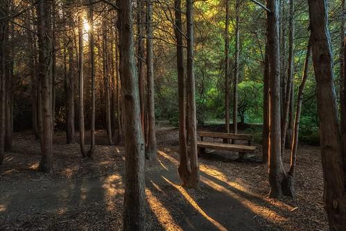 kubotagarden shadows bench hbm forest trees