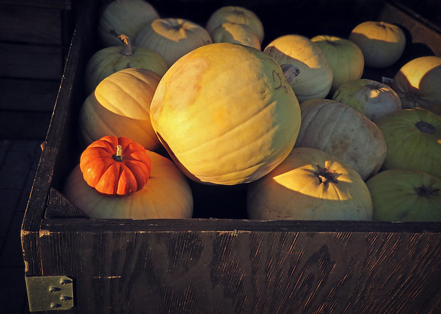 Let's give 'em pumpkin to talk about