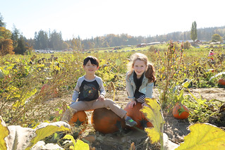 20181013 pumpkin patch13 | by schnell foto
