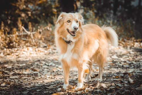 Cute orange dog | by wuestenigel