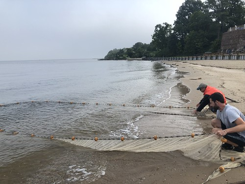 Photo of scientists conducting a seine net survey on a small beach.