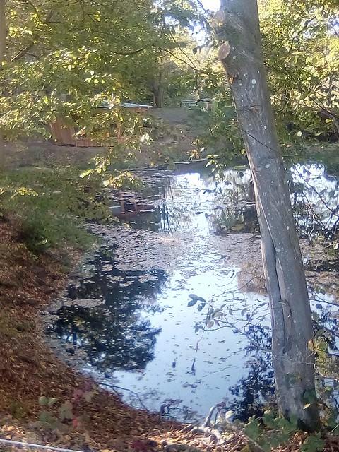 Bog standard pool in farmland somewhere near Hever