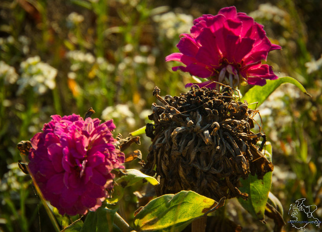 Blumenwiese von Landow im Herbst