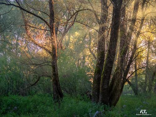Villetta Barrea: una passeggiata nel bosco / a trip in the wood | by Abulafia82