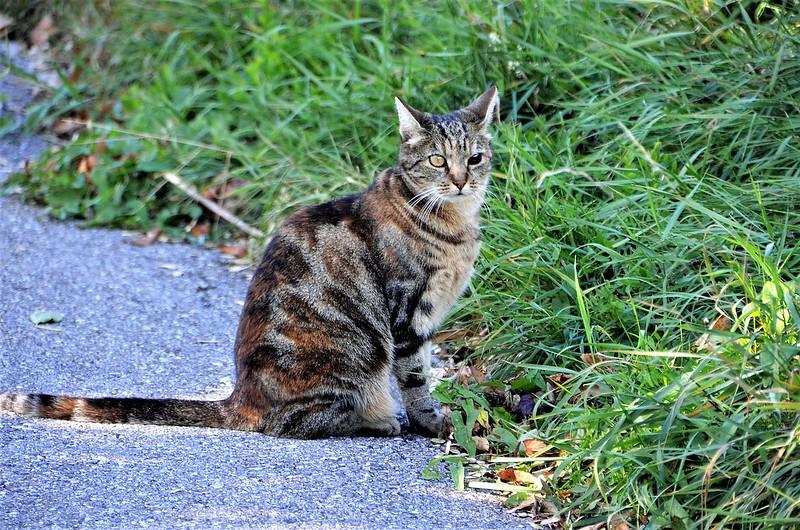 Cat 26.09 (1)
