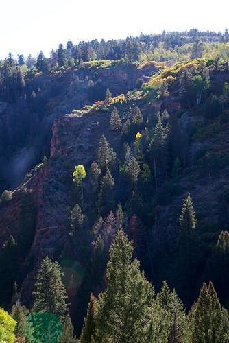 colorado us clearanceweek ouray trees mountain rocky autumn fall aspen color foliage canyon