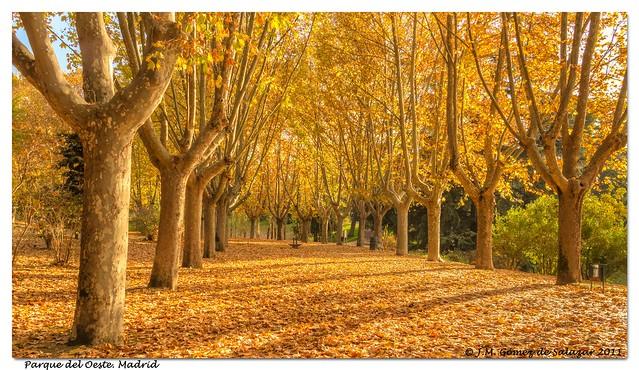 Paseo otoñal. Parque del Oeste. Madrid // Autumnal walk West Park. Madrid. Spain