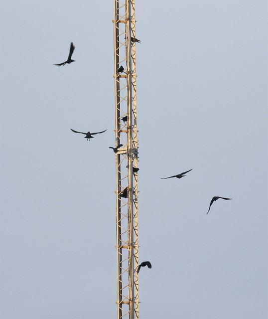 Radio Mast - Crow Hotel