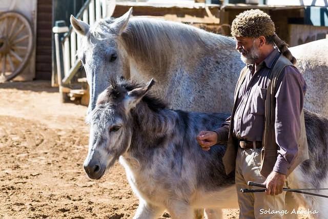 dressage of horses