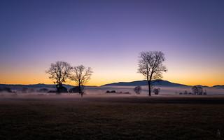 Sunrise Tree Meeting... | by der LichtKlicker