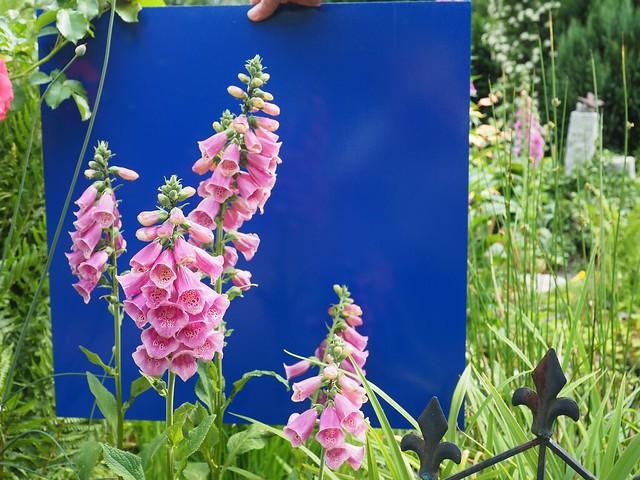 Blume fertig für Foto