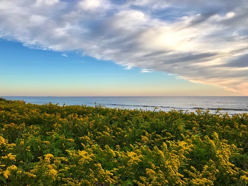 photoshop pixelmator iphone massachusetts ocean flowers goldenrod plumisland sunrise