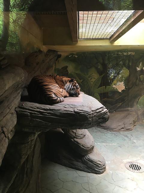Ogród Zoologiczny, Brno, Czechy
