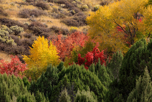 fall autumn foliage idaho