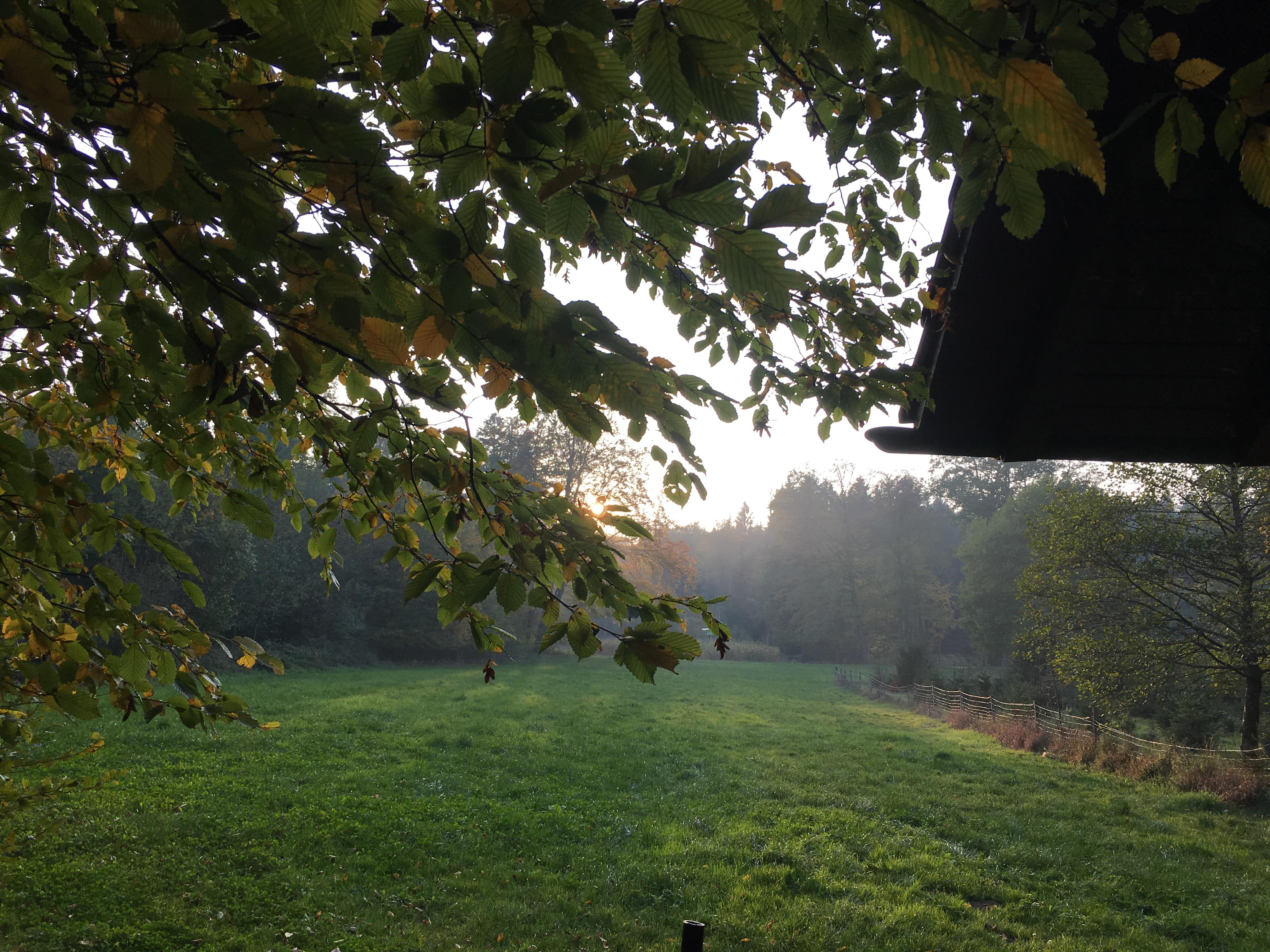 Herbst-Säuli 19. Oktober 2018