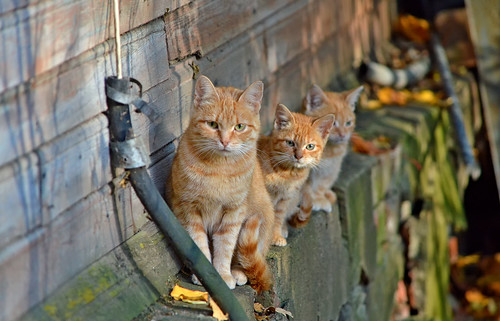 Autumn cats 😍 Finland 2018. | by L.Lahtinen (nature photography)