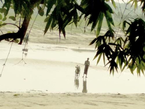 bangladesh padma river cow riverbank arif xiaomi 4x beautiful nature redmi