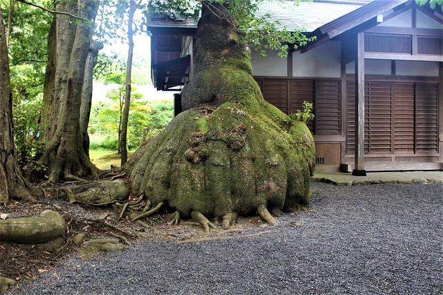 izawanomiya017