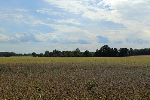 farmland field landscape pleasant agriculture wheat jeffersontownship ohio williamscounty trees clouds