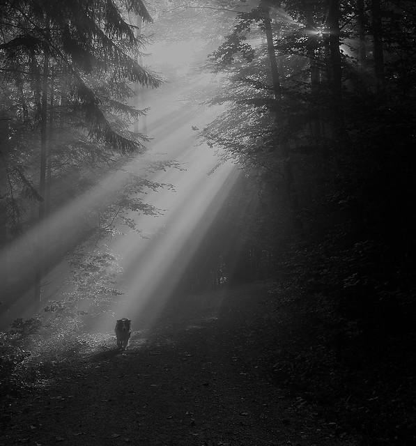 forestwalk ll (bnw edit)