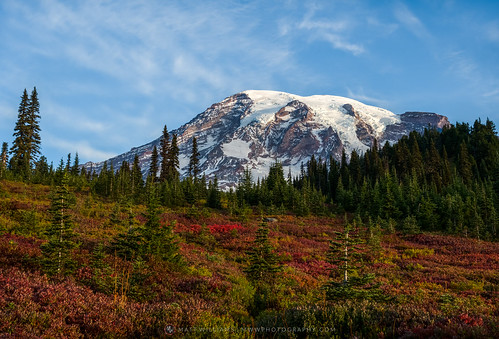 Mt. Rainier | by Matt Williams Gallery
