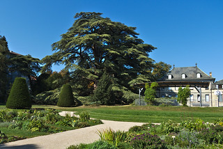 Cèdre du Parc Beaulieu à Genève