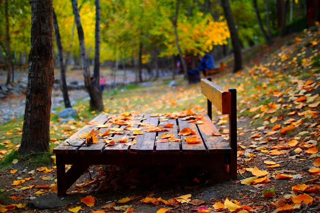 And love The most secret The secret is autumn. 🍁🍁🍁🍁🍁🍁