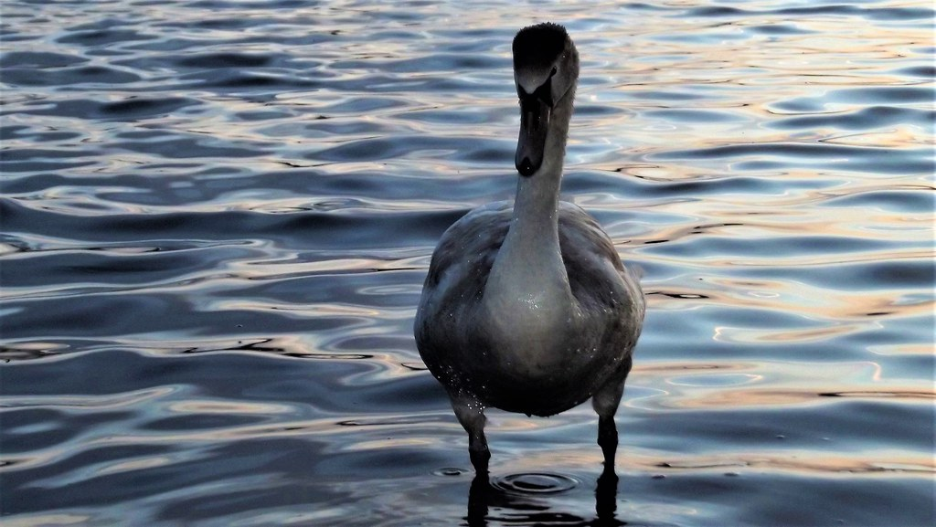 Tropical Island Beach Ambience Sound: Image Captured At Attenborough Nature Reserve