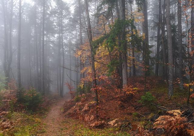 Maria Wörth / Mist forest Austria