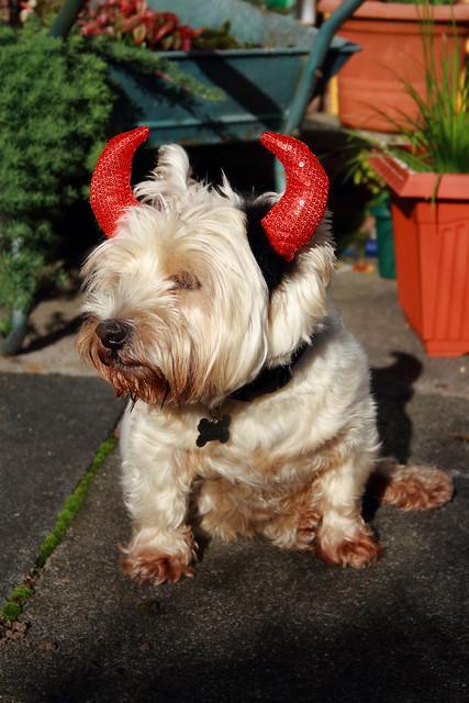 Halloween She Devil (Explored)