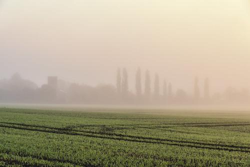 morning sunrise dawn sun yellow mist fog field church tree trees grass uk england cambridgeshire britain europe nature outdoors landscape
