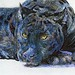 Postcards for the Lunch Bag - Black Jaguar