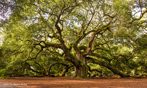 angel oak south carolina johns island charleston