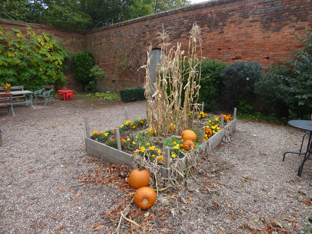 Pumpkins in the Melon Ground at Castle Bromwich Hall Gardens