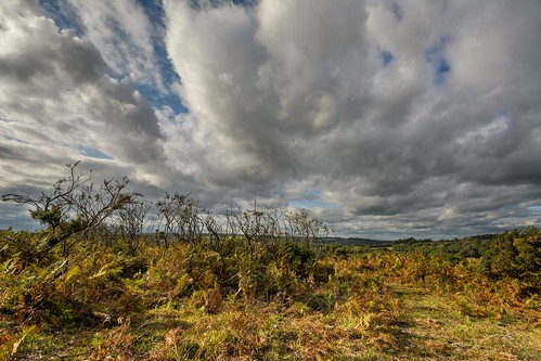 tree autumn eastsussex tamron1024f3545diiivchld nikon d7100 ashdownforest clouds england bracken