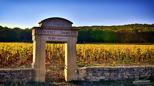 Latricières Chambertin 01 | by mg photographe