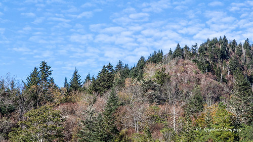 augphotoimagery blueridgeparkway landscape mountains nature outdoors scenic trees sylva northcarolina unitedstates