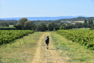 Walking between vines, Drome Provencal, France | by BuzzTrips