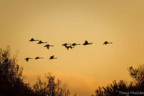 Twilight Flight | by Tony Mullen Photography