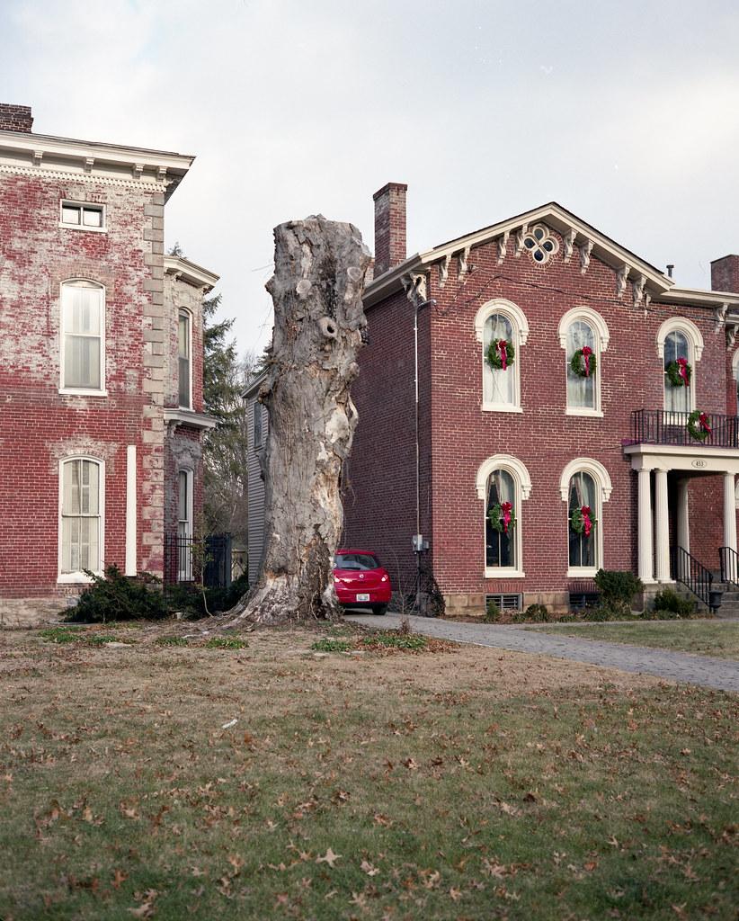 Dead tree, Lexington, KY