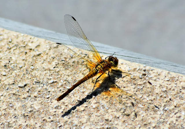 Dragonfly and shadows.