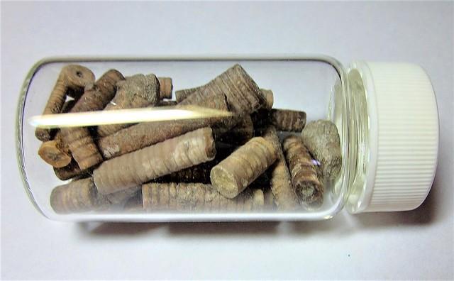 Bottle o' Crinoid sections --  Ordovician Era --  Kentucky USA 2638