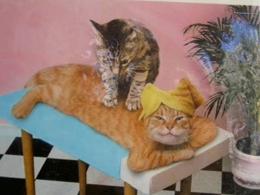 Its called a pussy massage | Doan Chung | Flickr