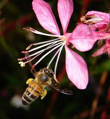 Hover | by aussiegall
