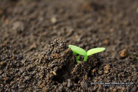 向日葵成長紀錄(第 5 天)
