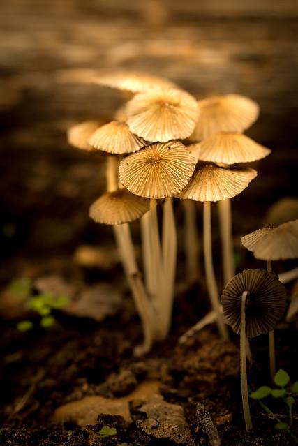 Morning Mushrooms