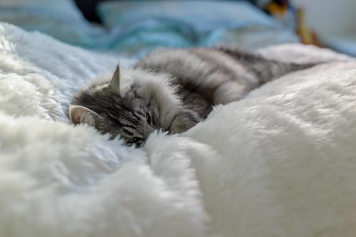 Pillow Rox color