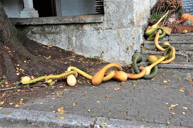 Gourds Kapuinerstrasse 07.10.2018