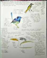 Nature journaling.